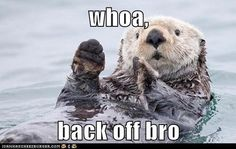 Animal Capshunz: We Otter Work This Out Calmly - Cheezburger - BETA