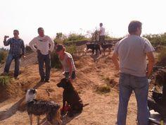 """Escenas con la """"Cámara Phantom"""" con alumnos caninos de Escul-Can Tarango http://www.gongfup.com/inicio/"""