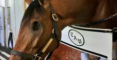 A one-eyed horse could be the first of its kind to win the annual Kentucky Derby
