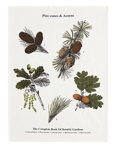 Wish list: tea towels: Botanical pine cones