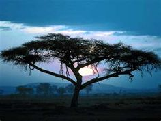 African trees are amazing!