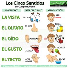 Los cinco sentidos. The five senses. #Learn #Spanish #LanguageSchool #Gringolingo