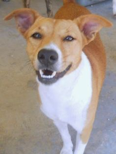 Rubicon Days: Foster Update: Bahamian Potcake Dog