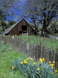 Photographic Print: Fence, Barn and Daffodils Poster by Darrell Gulin : 24x18in