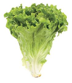 Leaf lettuce is the best for unwiches and bunless burgers! Plus it's a terrific salad lettuce. Lettuce Seeds, Green Lettuce, Lettuce Leaves, Bonsai Seeds, Bonsai Plants, Alkaline Fruits, Types Of Lettuce, Lactuca Sativa, Hydrangea Seeds