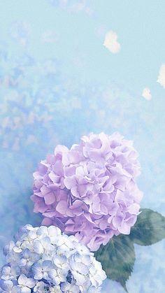 Hydrangea Shrub Woody Plant Vascular Plant Background - Back Plant Background, Flower Background Wallpaper, Flower Phone Wallpaper, Flower Backgrounds, Galaxy Wallpaper, Hydrangea Wallpaper, Flowery Wallpaper, Pastel Wallpaper, Beautiful Nature Wallpaper