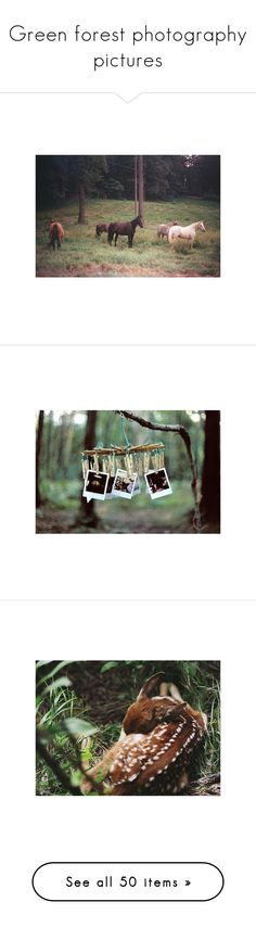 """""""Green forest photography pictures"""" by finally-the-stars-align ❤ liked on Polyvore featuring pictures, animals, photos, backgrounds, green, photography, fillers, saying, quotes and phrase"""