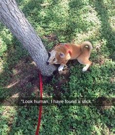 Funny Animal Pictures Of The Day 24 Pics - Funny Animal Quotes - - Funny Animal Pictures Of The Day 24 Pics The post Funny Animal Pictures Of The Day 24 Pics appeared first on Gag Dad. Funny Animal Jokes, Funny Dog Memes, Cute Funny Animals, Cute Baby Animals, Funny Dogs, Animal Humor, Funny Minion, Funny Kitties, Funny Horses