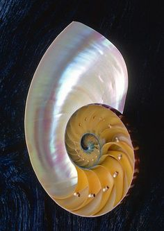Nacre shell. An example of beauty and intricate design. This shows the detail of planned order.
