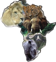 the big five: lion, cheetah, elephant,cape buffalo, and rhino