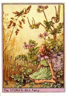 Storks-Bill Flower Fairy Vintage Print by Cicely Mary Barker, first published in London by Blackie, 1948 in Flower Fairies of the Wayside. Also called Wild Geranium