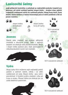 Poznáte stopy zvířat? - Dřevěné Vánoce Owl Name Tags, Wilderness Survival, Survival Skills, Activities For Kids, Drawings, Nature, Crafts, Animals, Etchings