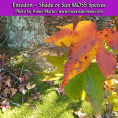 Moss For Sale, Moss Garden, Green Lawn, Annie, Eco Friendly, Grass, Environment, Shades, Landscape
