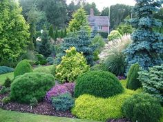 Wonderful Evergreen Grasses Landscaping Ideas 90