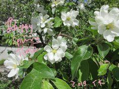 Happy Spring Time 2019 Happy Spring, Spring Time, Plants, Flora, Plant
