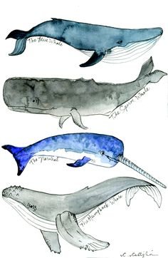 Whale, Whale, Whale x watercolor and illustration pen on Arches cold pressed 300 lb. About Crystina Castiglione Crystina Castiglione is known as The Messy Painter. Crystina lives in St Whale Drawing, Whale Painting, Watercolor Whale, Pen And Watercolor, Watercolor Animals, Watercolor Illustration, Watercolour Painting, Painting & Drawing, Watercolor Ideas