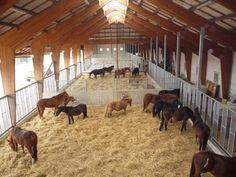 In de winter staat een deel van onze paarden in de groepshuisvesting