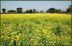 Punjab farms