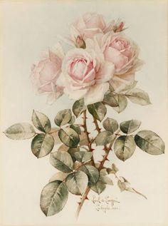 Shop Vintage Victorian Romantic Roses Postcard created by GirlyTemplate. Art Floral, Floral Vintage, Vintage Flowers, Vintage Prints, Vintage Art, Illustration Botanique, Botanical Illustration, Rose Illustration, Rose Art