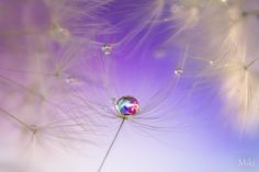 never let me go by Miki Asai on 500px