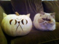 Where's the pumpkin that looks like me?