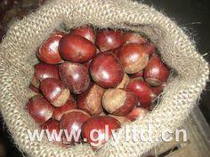 Fresh-Chestnut.jpg