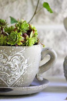 succulents in a mug