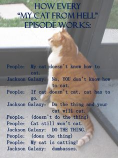 """How every """"My Cat From Hell"""" episode works 