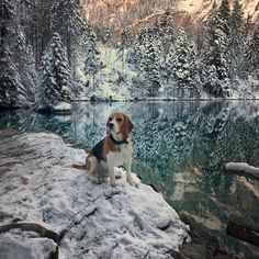 Discovering the beauty of winter ❄️♥️! Happy Valentines my friends! . . . . . . . #beagle