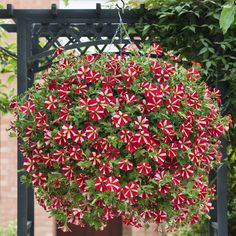 Lots of smaller flowers with clear markings. Yellow eye gives a tricolor effect. Yellow Eyes, Star Patterns, Petunias, Small Flowers, Bright Colors, Stars, Red, Bright Colours, Little Flowers