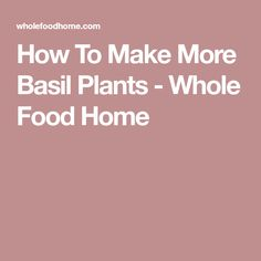 How To Make More Basil Plants and have plenty of basil all through the season for pennies. Baby Food Recipes, Whole Food Recipes, Diy Pom Pom Rug, Hosta Care, Make And Do Crew, Basil Plant, Garden Solutions, How To Make A Pom Pom, Farm Gardens