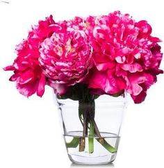 Hot Pink Peonies In Glass Waterlike Faux Flower Arrangements, Pink Peonies, Faux Flowers, Hot Pink, Glass Vase, Wallpaper, Holiday Decor, Fabric, Design
