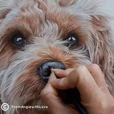 Clicker Training Dogs: Debunking Some Common Myths Pencil Art Drawings, Art Drawings Sketches, Animal Sketches, Animal Drawings, Dog Drawing Tutorial, Painting Fur, Color Pencil Art, Colored Pencil Portrait, Watercolor Animals
