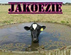 Jakoezie speciaal voor koeien