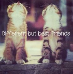#super quote #cute #cats #quotes #different