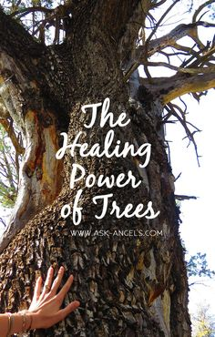 Tap Into The Healing Power of Trees...   Click to learn more!   #askangels #healingtrees #tree #healing