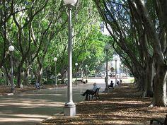 Hyde Park - Sydney - community action for sustainability - CASwiki Hyde Park Sydney, Landscape Architecture, Architecture Design, May Bay, Light Rail, Built Environment, Sydney Australia, Ecology, The Locals