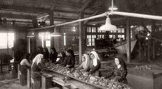 Era il pomeriggio del 4 maggio 1871. Al cantiere di Atzuni, nella miniera di Montevecchio, un gruppo di donne e di bambine camminavano verso un capannone con lo sguardo a terra