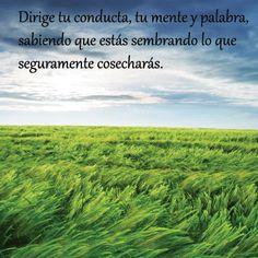 Image on Palabras que despiertan  http://palabrasquedespiertan.com/social-gallery/cosechas