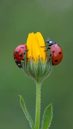Delightful ladybugs in the garden. Ahhh, spring!