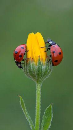 Delightful ladybugs in the garden.