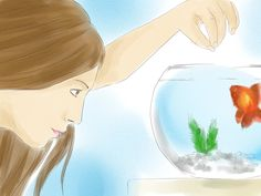 Many people are interested in finding out the gender of their goldfish. You might want to know for breeding purposes, or just to make sure you didn't name your female goldfish George. Sexing goldfish is a simple process, but can be very...