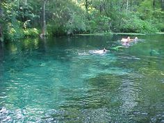 Ichetucknee Springs Florida.  (I grew up tubing this river BEFORE it was made a State Park)