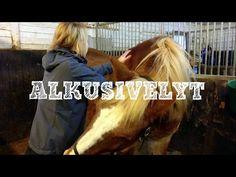 Miksi hevoshieronnan aluksi tehdään alkusivelyt? Katso videosarjan starttaava video ja lue blogi niin tiedät!  http://impulsoblogi.blogspot.com/2016/12/shiatsu-hevoshierontaa-videolla-osa-1.html?spref=fb  Hevosshiatsu, hevoshieronta, hevoshieroja, Tampere