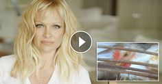 Please, take a moment to sign Pamela Anderson and MFA's petition calling on Gordon Food Service to stop torturing chickens Fun To Be One, Something To Do, Mercy For Animals, Animal Agriculture, Factory Farming, Stop Animal Cruelty, Vegan Animals, Eye Photography, Animals Of The World