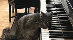 catsmeowforme:  Catwig van Beethoven