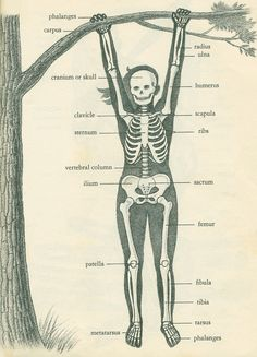the swinging girl skeleton | The illustration above is from … | Flickr