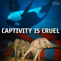 Captivity Is Cruel and Wrong.