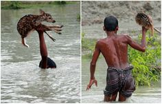 During the flood not far from Noakhali District, in the People's Republic of Bangladesh, a boy named Bilal saw a sinking young deer away from its family. Risking his life, he saved the animal from drowning.