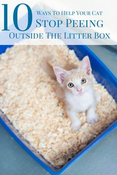 When your cat starts shunning its litter box in favor of other places throughout your home, it is definitely not something you want to become a habit